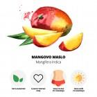 Prednosti mangovega masla