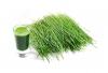 S pšenično travo bosta skrb za zdravje ter dobro počutje odveč