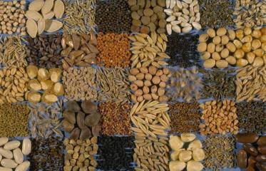 Semena - kakovosten vir hranil