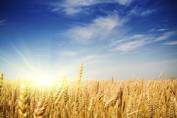 Je integrirana pridelava naravi prijazna?