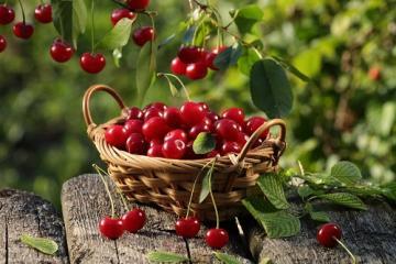 Češnje – majhno darilo narave z ogromno pozitivnimi učinki