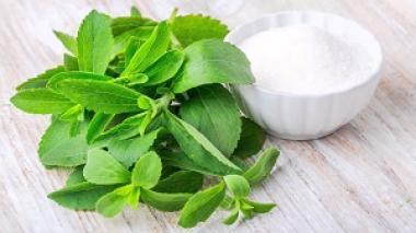 Stevia je sladek dar narave