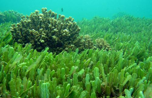 Svet alg