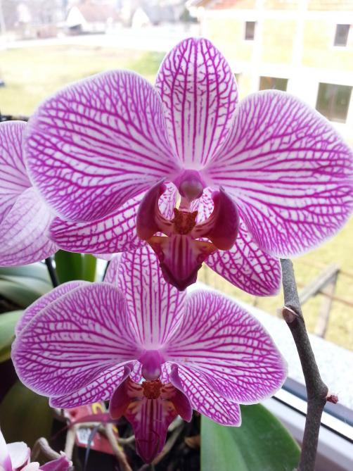 VIDEO: Kako uspešno presaditi orhideje?