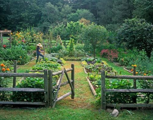 Dobri in slabi sosedi v zelenjavnem vrtu