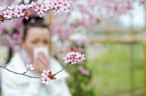 Zgodba naše stranke: Odrešitev z alergofit gobicami