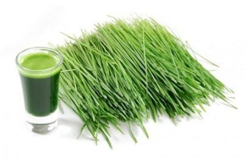 Pšenična trava in njena uporaba