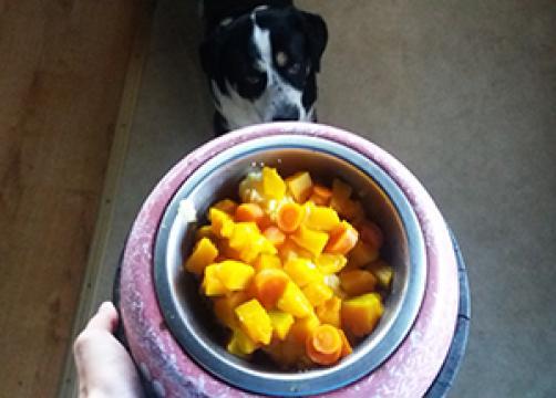 ZA KUŽKE: Polnovredni rumeni obrok