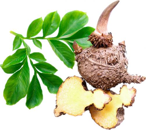Konjak glukomanan je živilo za hujšanje