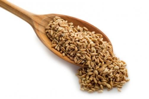 Pira – starodavna sorta pšenice, ki osvaja svet