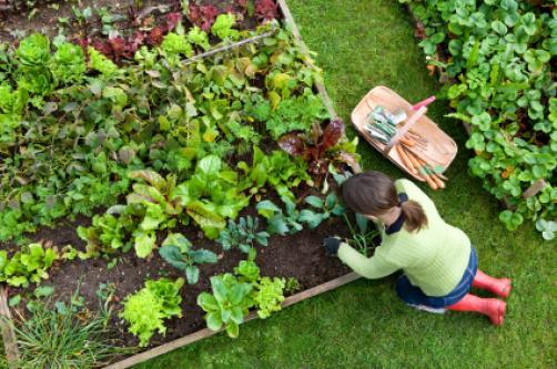 Ustvarite si organski vrt