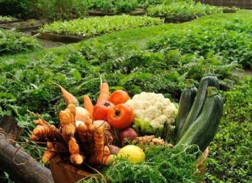 Skrbite za prehrano rastlin?