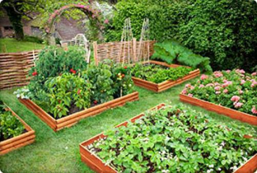 Kako zaštititi svoje vrtne biljke od bolesti i štetočina?