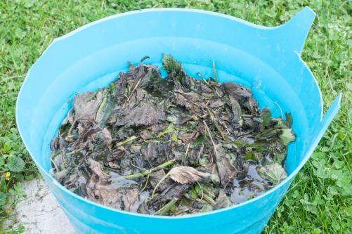 Naraven insekticid iz kopriv