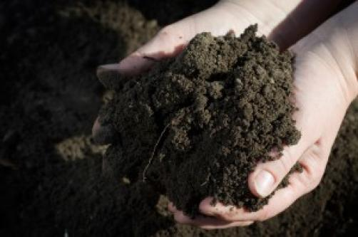 Kako u vrtu poboljšati kvalitetu tla?