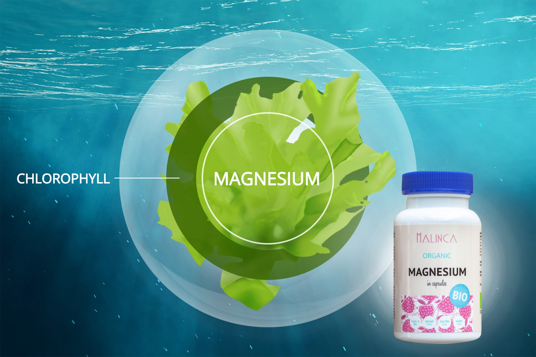 Magnesium in Chlorophyll