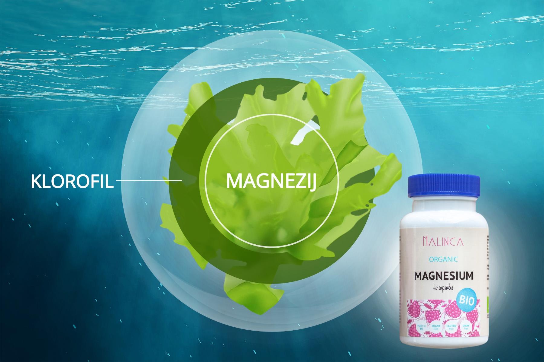 Magnezij v klorofilu