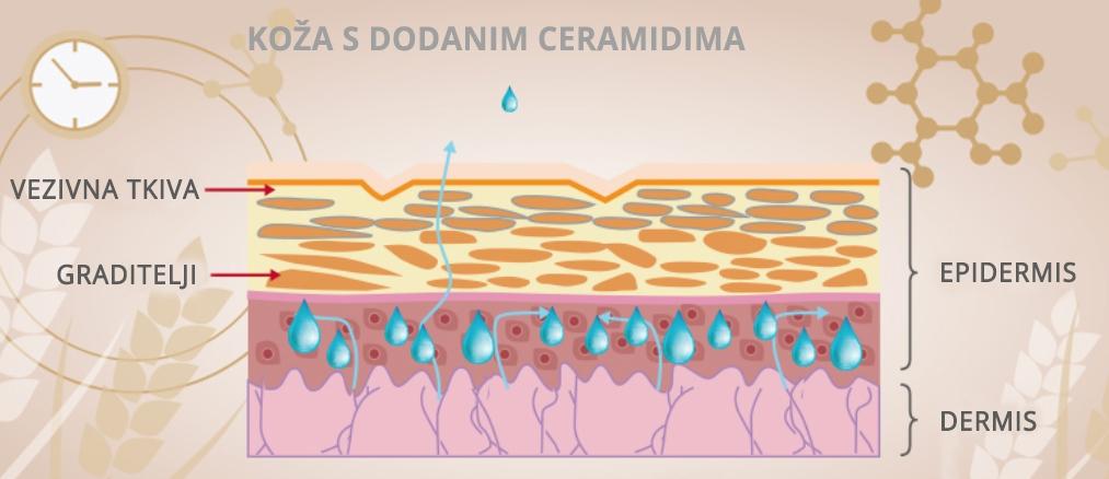 Koža s dodanim ceramidima