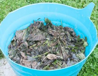 Naraven insekticid iz kopriv (2)