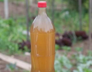 Naraven insekticid iz kopriv 3