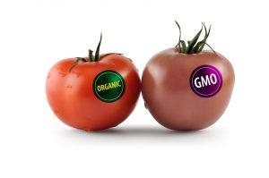 Gensko spremenjena hrana